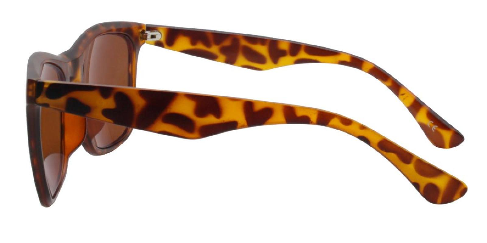Hanowe-Brown-Square / Cat-TR-Sunglasses-additional3